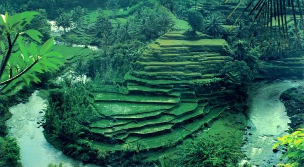 Kỳ nghỉ hè tuyệt vời ở Bali