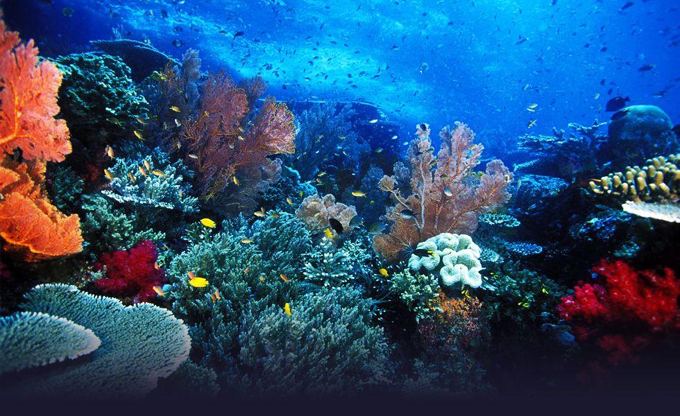 Kỳ nghỉ tuyệt vời ở đảo Raja Ampat