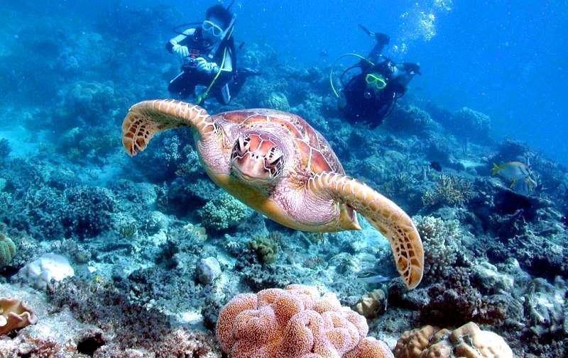 Rực rỡ rạn san hô Great Barier ở Úc