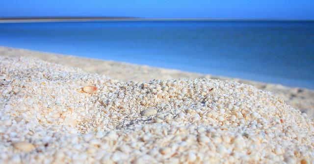 Thích thú với bãi biển vỏ sò ở Úc