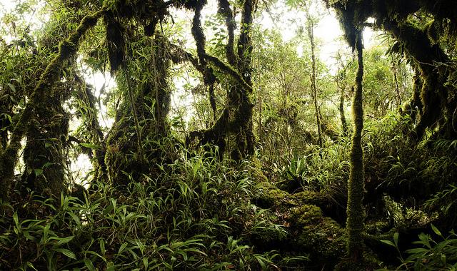 Đến Indonesia nhớ ghé thăm rừng nhiệt đới Sumatra