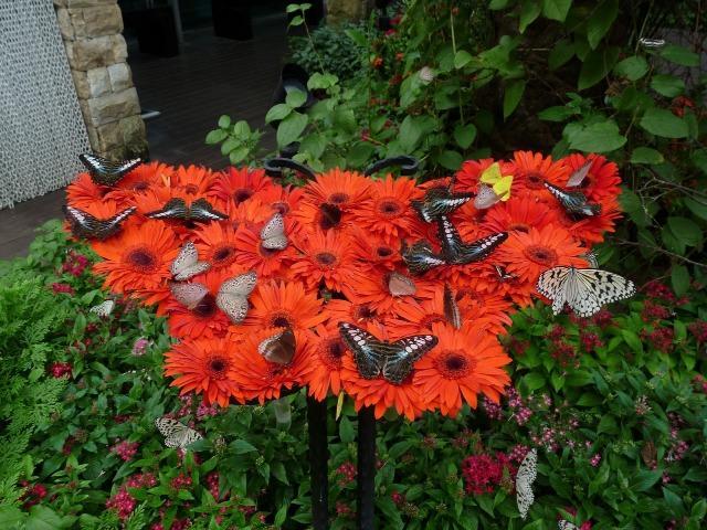 Thăm công viên bướm và vương quốc côn trùng Singapore