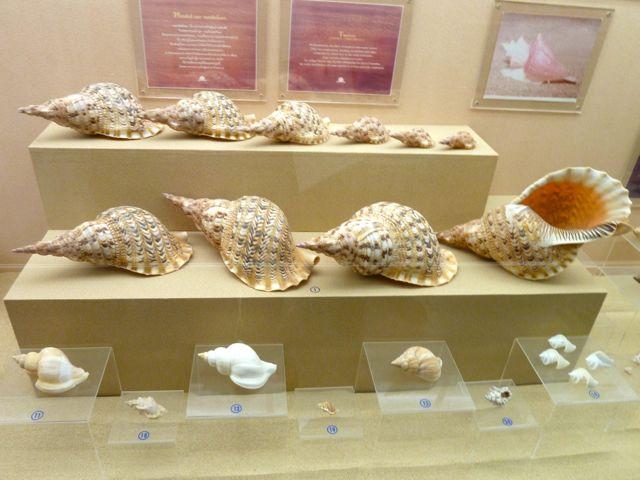 Tham quan bảo tàng sò biển ở Phuket