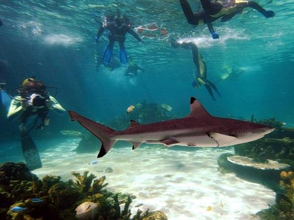 Tham quan vịnh Cá Mập nổi tiếng ở Úc