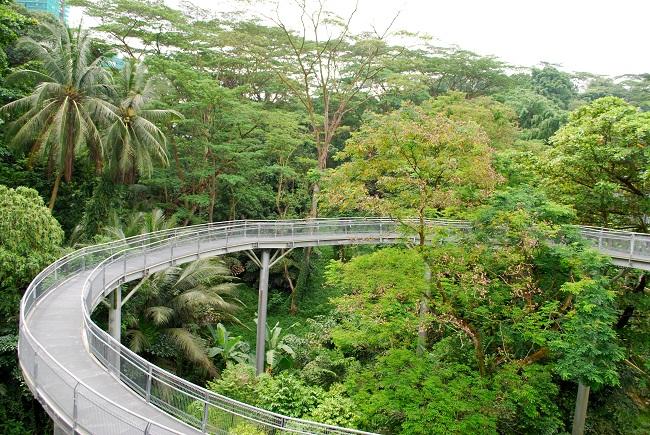 Dạo bộ trên con đường mòn đẹp nhất Singapore