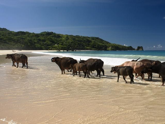 Sumba đảo ngọc mới của Indonesia