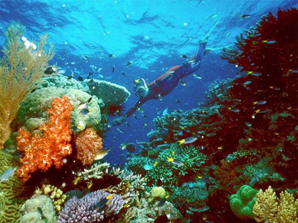 lặn biển tại cụm đảo Similan