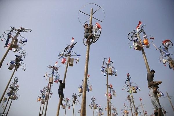 Lễ hội leo cột mỡ thú vị