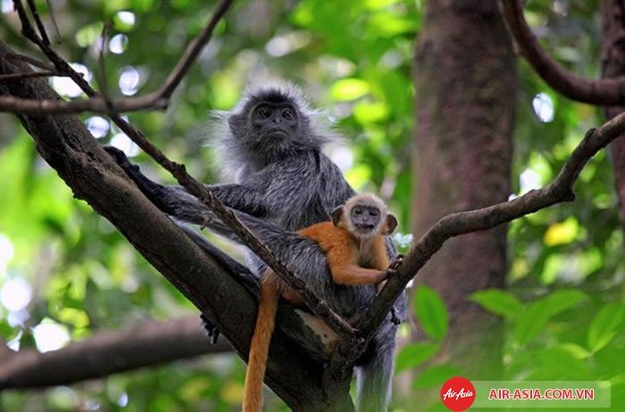 Khu dự trữ rừng Bukit Nanas - Malaysia