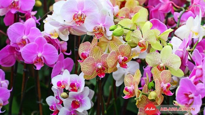 Thung lũng Orchid là nơi trồng hoa lan lớn nhất thế giới