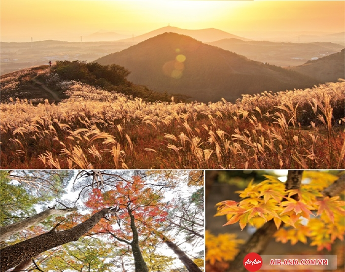 Mùa thu trên đảo Jeju