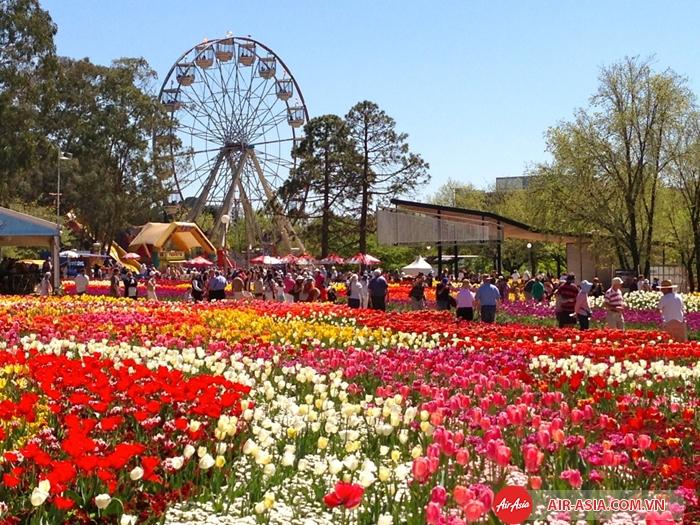 """Những """"suối hoa"""" đầy màu sắc ở lễ hội hoa Floriade"""