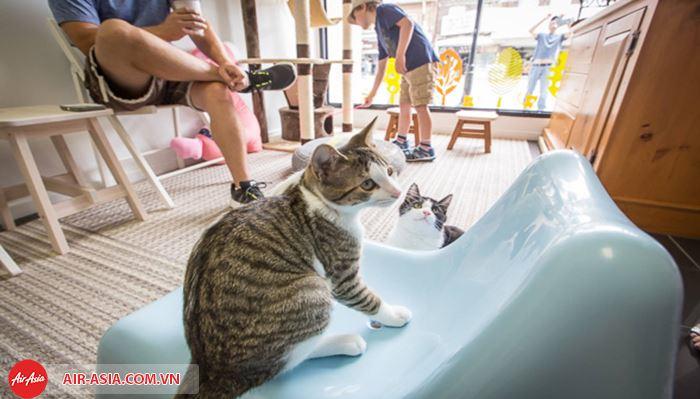 quánMeow Meow Cat Café