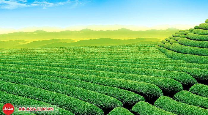 Vườn chè ở Sylhet