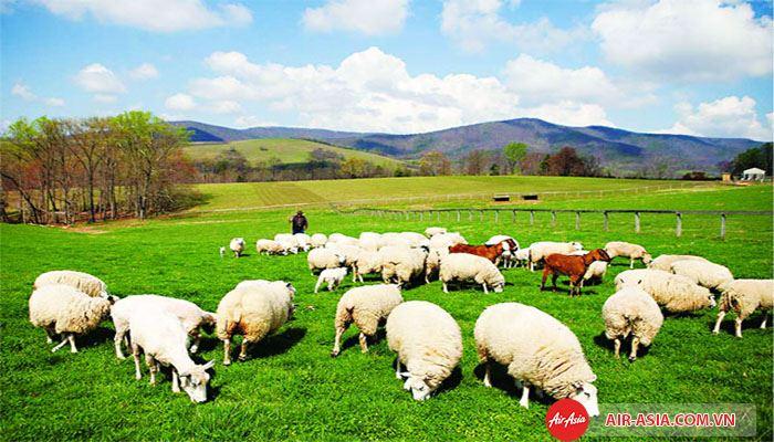 The Entrance với những con cừu dễ thương