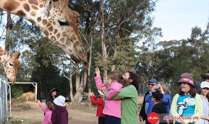 Sở thú tại Melbourne với nhiều loại đồng vật hoang dã