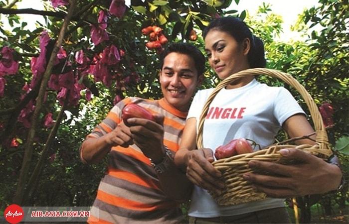 Nông trại trái cây